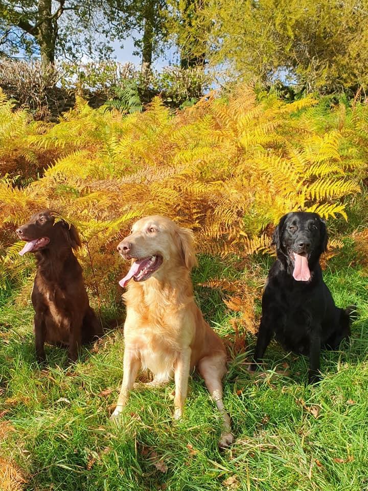 The Three Amigos (Ola, Zac and Ila)