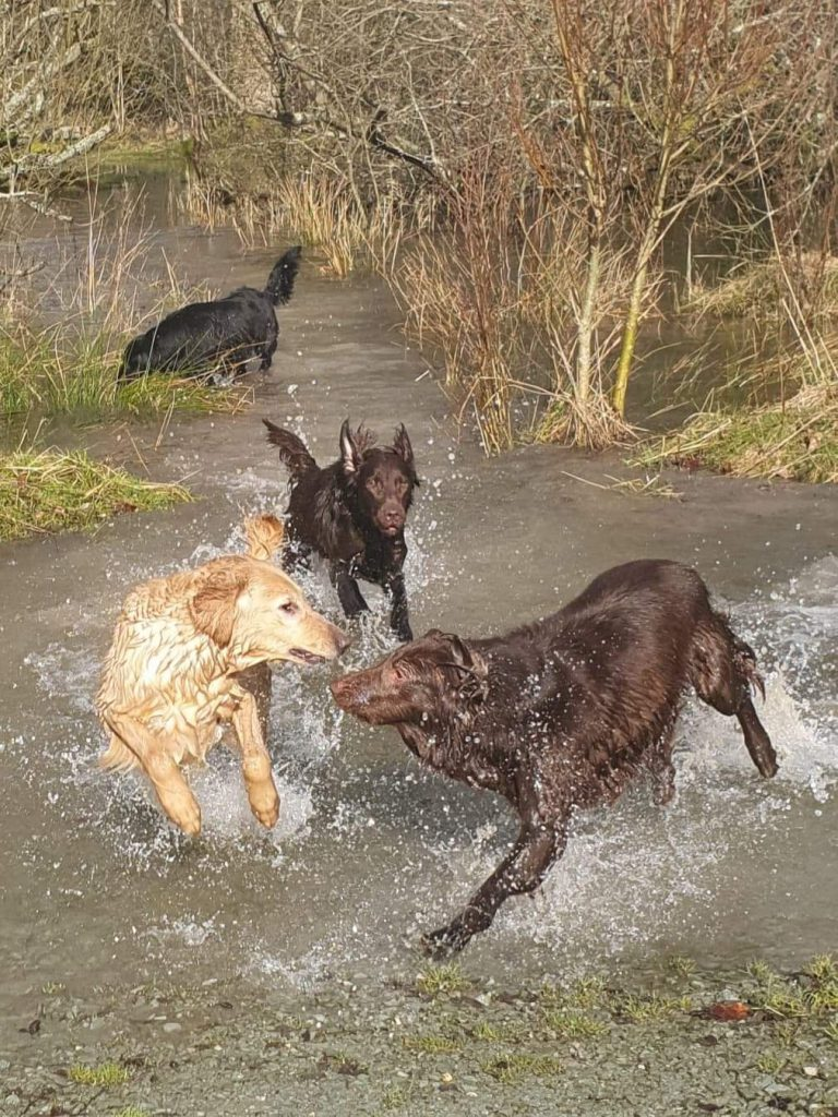 Ava, Sia, Ola and Ara having fun in the flood.